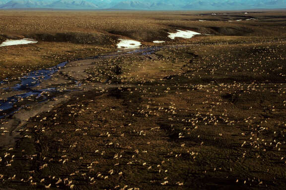 This undated aerial photo shows a herd of caribou on the Arctic National Wildlife Refuge in northeast Alaska. Congress is a step closer to opening Alaska's Arctic National Wildlife Refuge to oil and gas drilling.