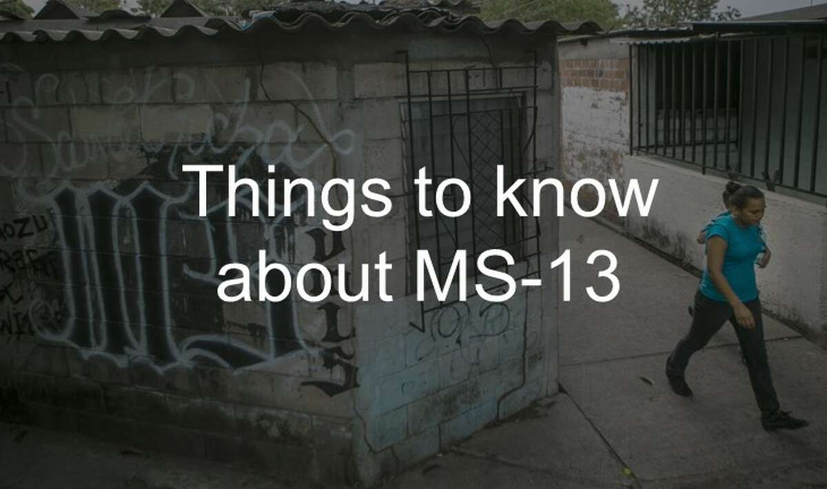 Learn more about the MS-13 gang up ahead.