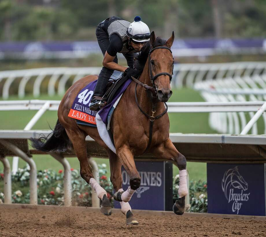 Lady Eli is favored in the $2 million Breeders' Cup Filly & Mare Turf on Saturday at Del Mar. Photo: SKIP DICKSTEIN, Albany Times Union