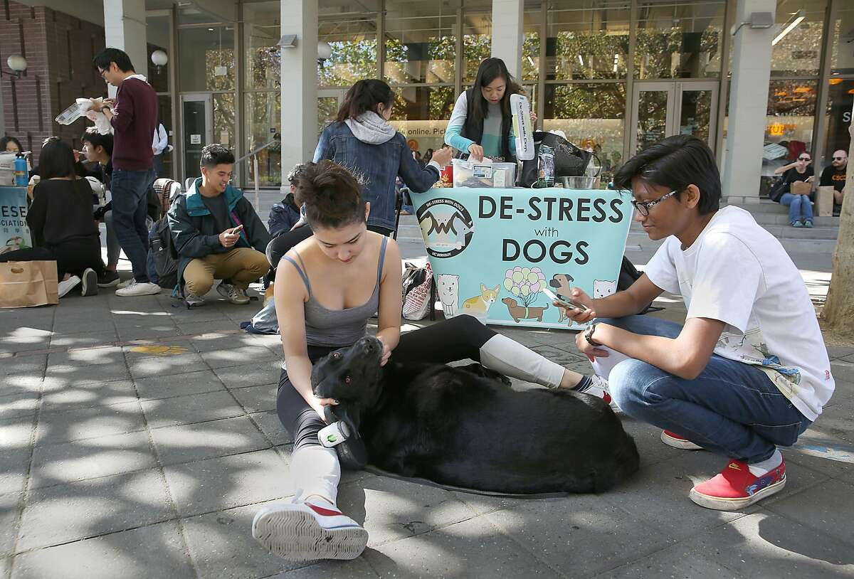 Data science major Mellia Kanani (left) and art practice major and CS minor Ashna Choudhury with Garbo (a professor's dog) in front of the student union at the UC Berkeley campus on Wednesday, November 1, 2017, in Berkeley, Calif. De-Stress with Dogs is a group at UC Berkeley.