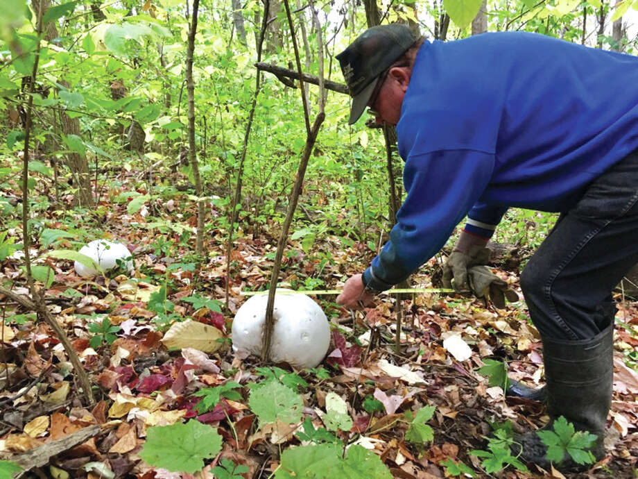 Vincent English with one three giant puffball mushrooms he found recently on his property in rural Glen Carbon. Photo: Steve Horrell