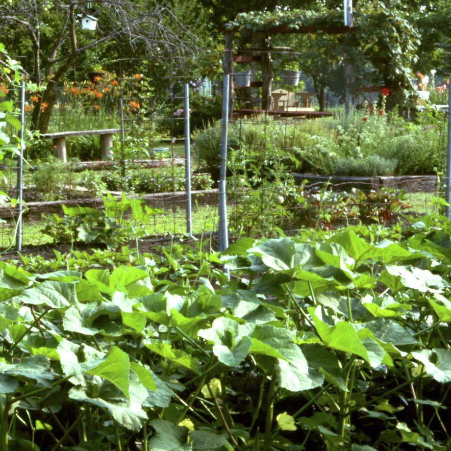 The main idea of rotating any crops in a planting regime is to avoid having accumulations of insects and diseases that are specific to certain types of plants. Soil-borne problems can get worse and worse with repeated plantings, so it's wise to vary the types of crops you have in any particular spot. Photo: Courtesy Photo