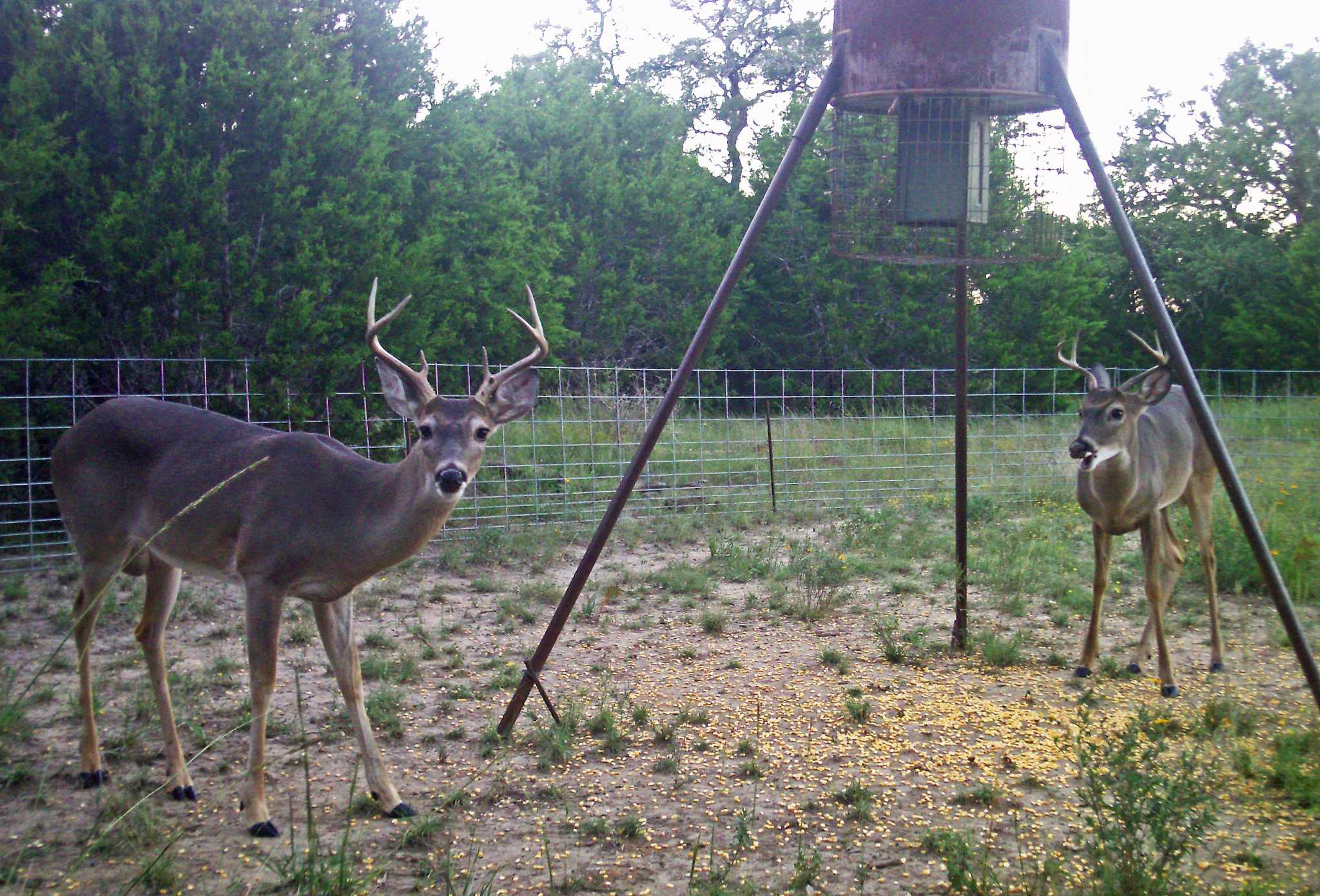 com home disposition deer feeder accesskeyid protein highrackdeerfeeders alloworigin feeders established