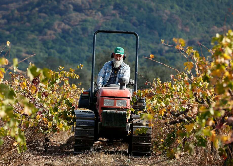 Will Bucklin drives a tractor through his Old Hill Ranch vineyard in Glen Ellen. Bucklin only lost a small percentage of the vines in last month's devastating Wine Country fires. Photo: Paul Chinn, The Chronicle