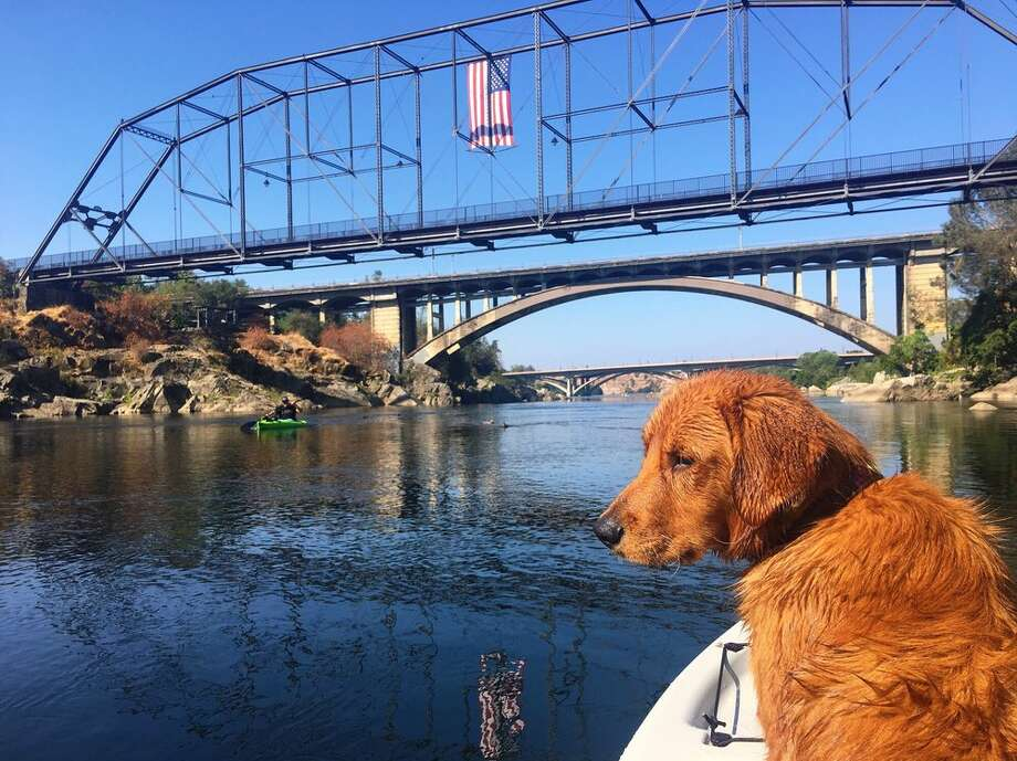 A golden retriever goes for a boat ride on the American River north of Negro Bar State Recreational Area (a.k.a. Negro Bar State  Park). Photo: Kimberly G./Yelp