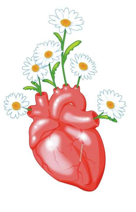 Heart illustration with daisies Photo: Robert Wuensche Illustration / Houston Chronicle