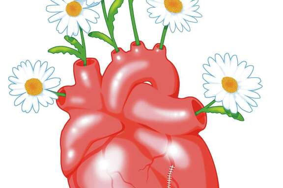 Heart illustration with daisies
