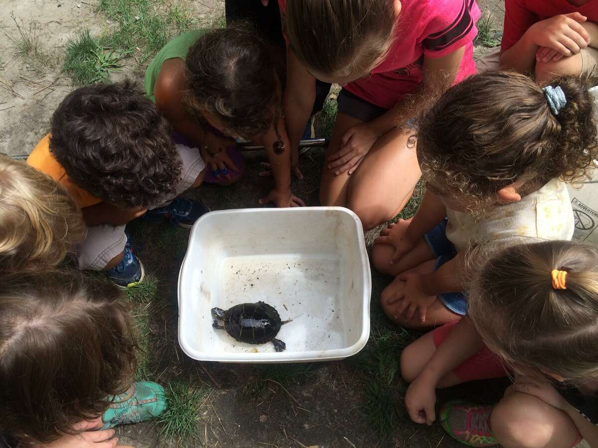 Students in kindergarten through Grade 5, while out of school on Election Day, are invited to experience a Flanders Explore Nature Adventure program. Here, children take a look at a turtle.