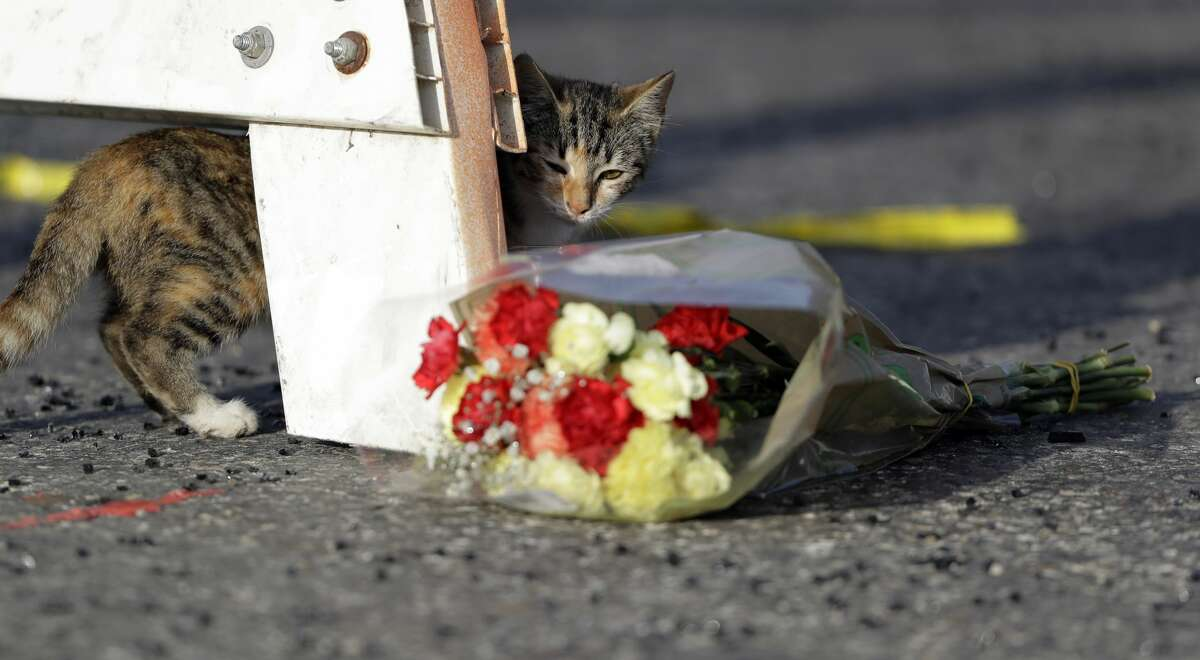 A cat walks past a bouquet of flowers at the base of a roadblock where law enforcement officials work at the scene of a shooting at the First Baptist Church of Sutherland Springs, Monday, Nov. 6, 2017, in Sutherland Springs, Texas. A man opened fire inside the church in the small South Texas community on Sunday, killing more than 20 and wounding otherds. (AP Photo/Eric Gay)