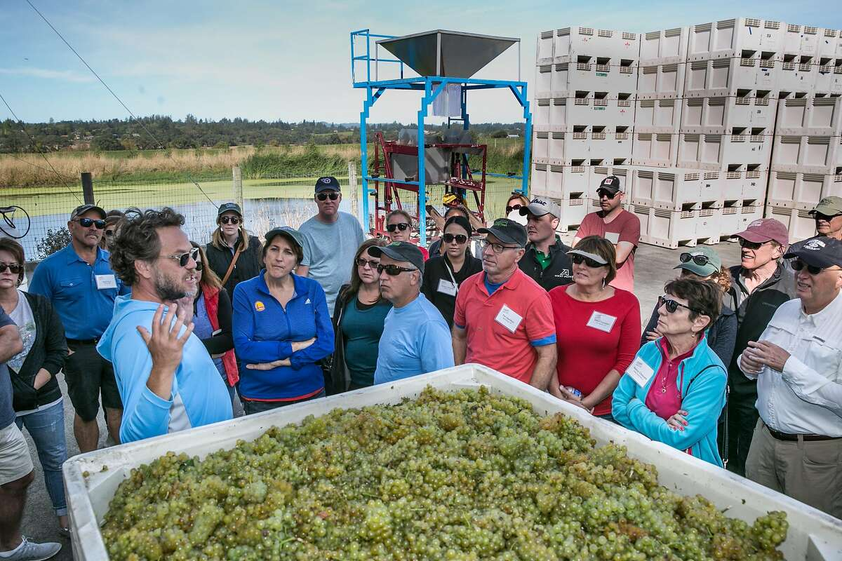 Campers get a lesson in grape fermentation at Shug Winery.