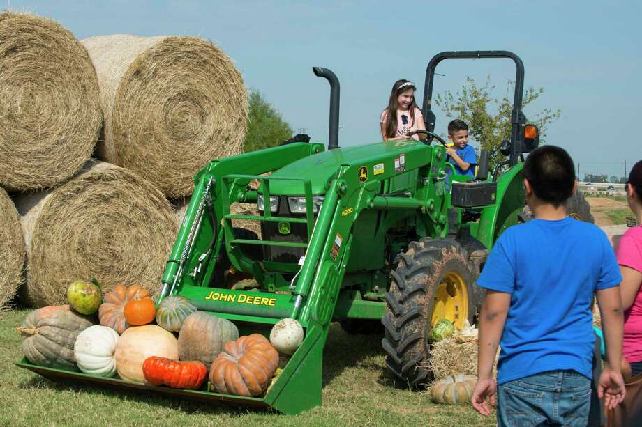 The annual Harvest Festival in Harvest Green returns 11 a.m. to 3 p.m. Saturday, Nov. 11, and will include a farmers market, pumpkin patch, animal adoptions, food trucks and the chance to meet farm animals. Photo: Harvest Green