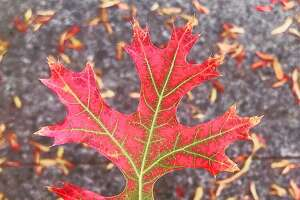 "Instagram post by Rachel Nichols (@rnichols) of ""autumn in Sonoma."""