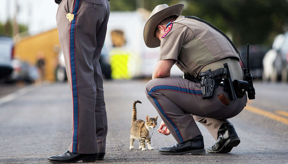 A Texas state trooper pets a cat outside the First Baptist Church in Sutherland Springs, Texas, on Monday, Nov. 6, 2017, the day after a gunman killed more than two dozen people who were attending a church service there.See other scenes from the Sutherland Springs shooting. Photo: Nick Wagner/Associated Press