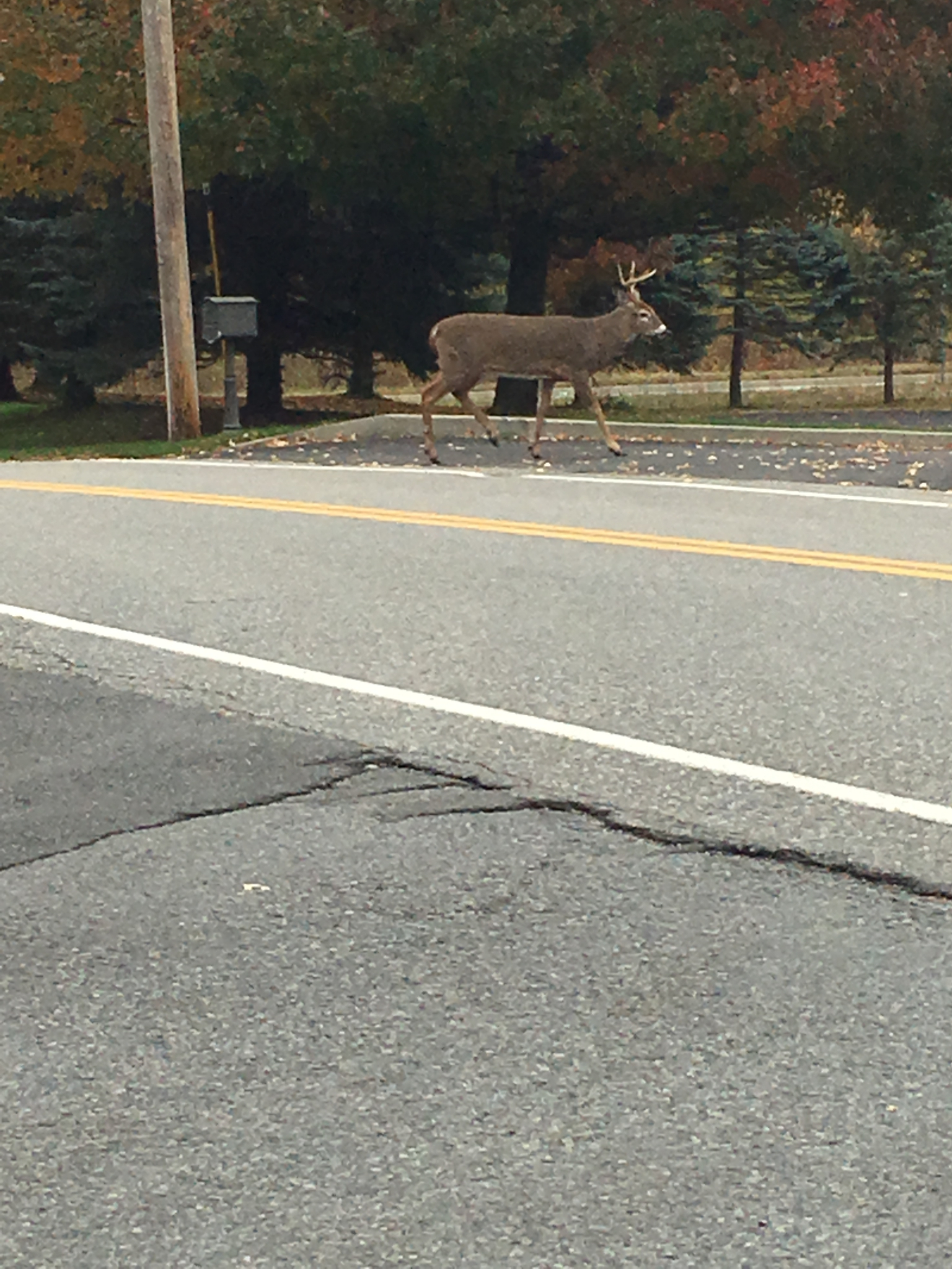 wild animal sightings in the capital region times union