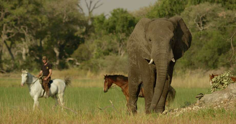 Okavango Horse Safaris owns three camps in the Okavango Delta, Botswana. Photo: Okavango Horse Safaris