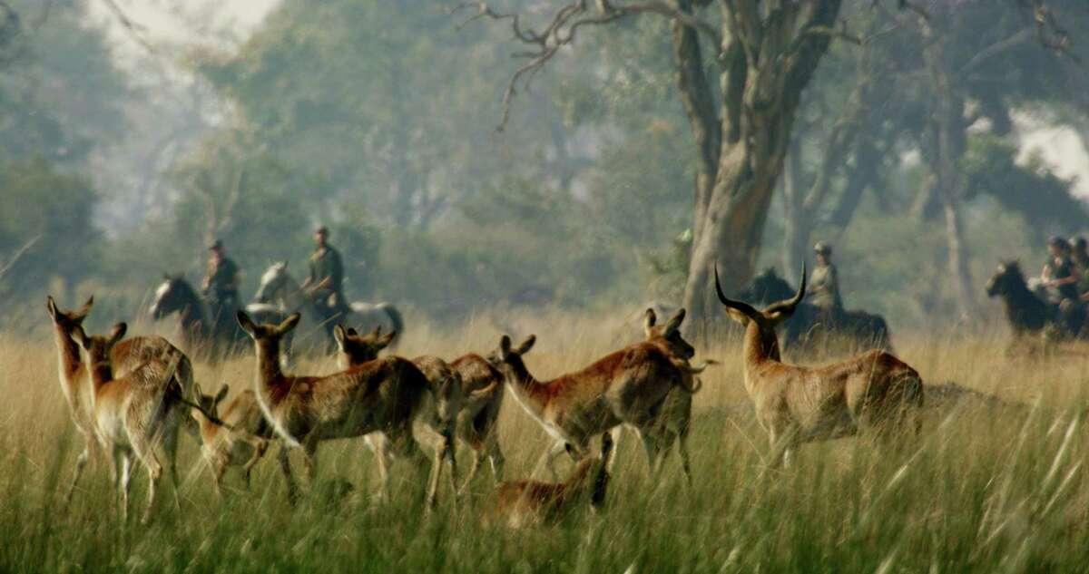 Okavango Horse Safaris owns three camps in the Okavango Delta, Botswana.