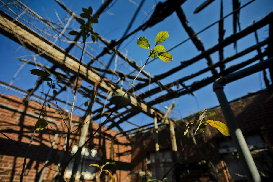 Vegetation is illuminated by sunlight on Wednesday, Nov. 8, 2017 inside a pumphouse in Upper Emerson Park that pre-dates World War II. A $405,000 renovation plan to upgrade the relic to create a river overlook was approved for a $295,000 Natural Resources Trust Fund through the Michigan Department of Natural Resources a few weeks ago. (Katy Kildee/kkildee@mdn.net) Photo: (Katy Kildee/kkildee@mdn.net)