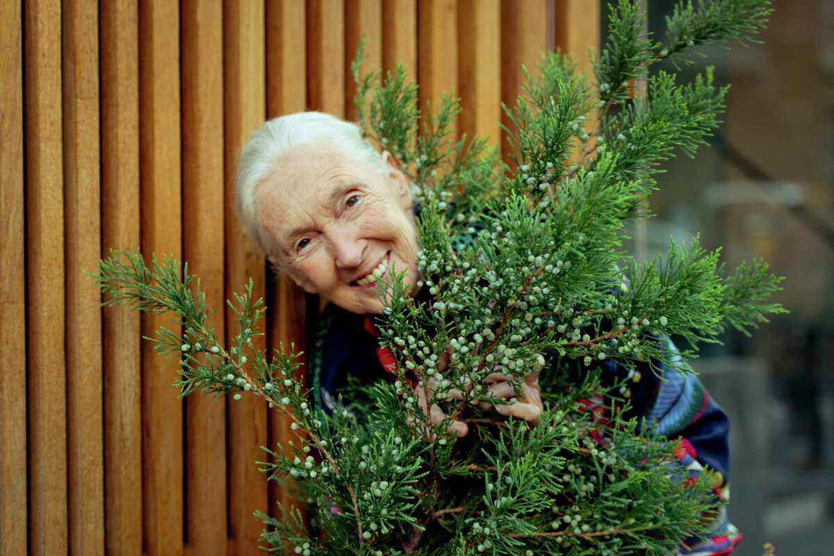 Jane Goodall, whose early life and accomplishments are chronicled in the new documentary