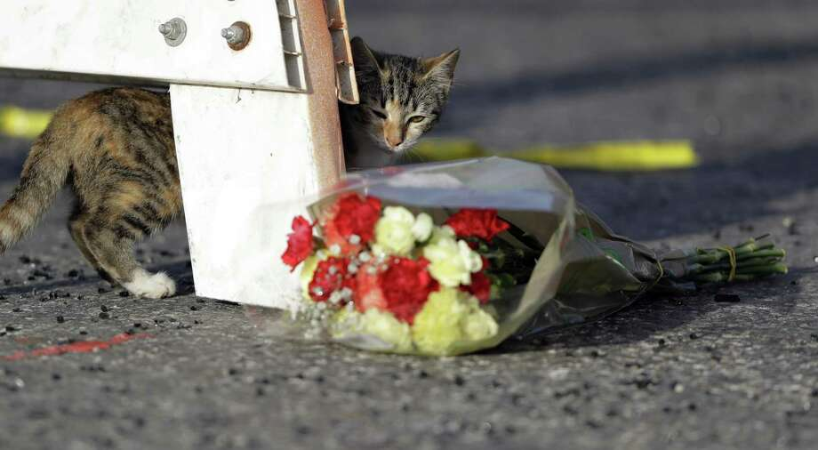 """A cat walks past a bouquet of flowers at the base of a roadblock where law enforcement officials work at the scene of a shooting at the First Baptist Church of Sutherland Springs, Monday, Nov. 6, 2017, in Sutherland Springs, Texas. Nicknamed """"NewsCat,"""" the cat has proved so friendly it's interacted with various media members and law enforcement on the scene. Photo: Eric Gay /Associated Press / Copyright 2017 The Associated Press. All rights reserved."""