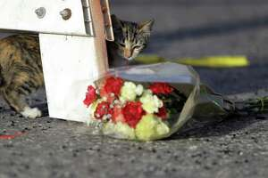 "A cat walks past a bouquet of flowers at the base of a roadblock where law enforcement officials work at the scene of a shooting at the First Baptist Church of Sutherland Springs, Monday, Nov. 6, 2017, in Sutherland Springs, Texas. Nicknamed ""NewsCat,"" the cat has proved so friendly it's interacted with various media members and law enforcement on the scene."