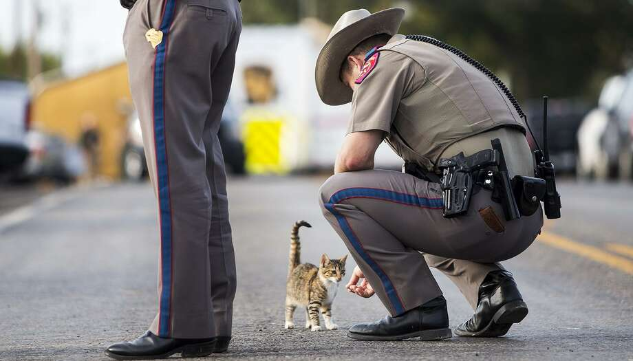 """""""NewsCat"""" has made fast friends with more than just media on the scene. A Texas state trooper pets the cat outside the First Baptist Church on Monday, Nov. 6, 2017, the day after a gunman killed more than two dozen people who were attending a church service there. Photo: Nick Wagner /Associated Press / Austin American-Statesman"""