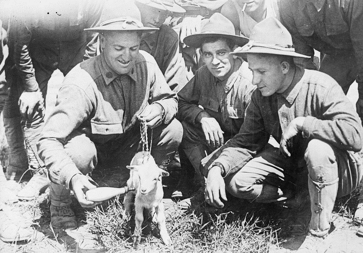New York National Guard soldiers of the 27th Division training at Camp Wadsworth, S.C., feed their company mascot in 1917. The 27,000 soldiers of the division trained at the camp from September 1917 to April 1918. ( Library of Congress)