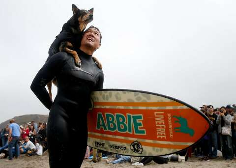 How pet owners train their pups to be elite dog surfers - SFGate