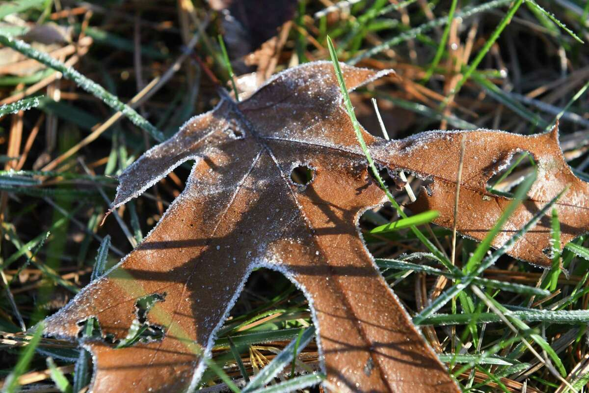 Pockets of the Capital Region experienced the first fall frost Thursday morning. In this picture, fallen foliage is highlighted by frost on Thursday morning, Nov. 9, 2017, in Delmar, N.Y. (Will Waldron/Times Union)