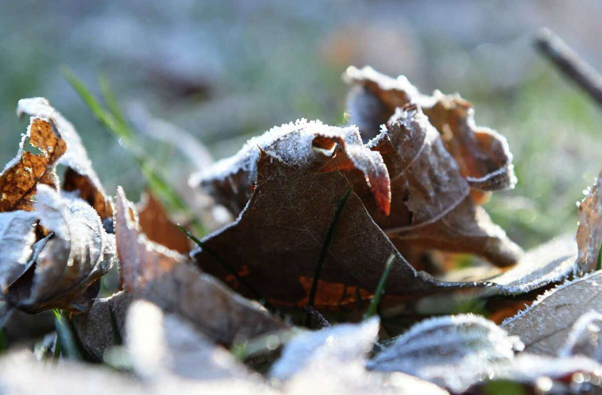 Fallen foliage is highlighted by frost on Thursday morning, Nov. 9, 2017, in Delmar, N.Y. (Will Waldron/Times Union)