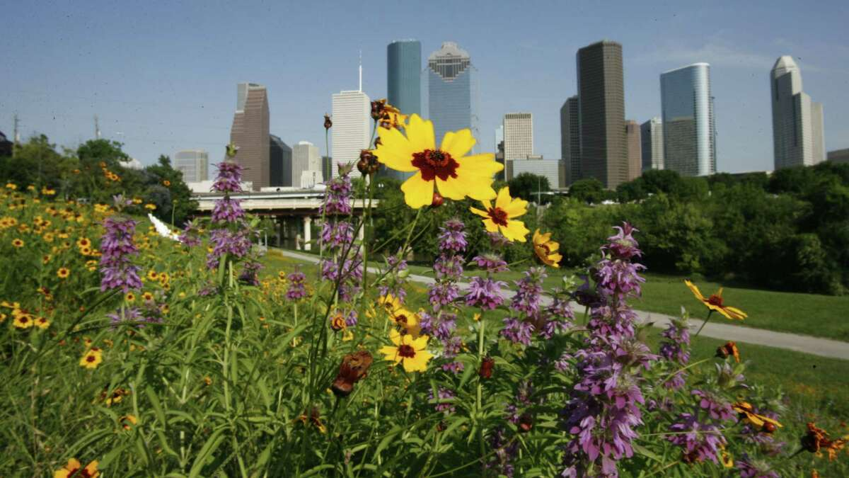 Above: The root system of the perennial Texas blazing star improves soil health.  Below: Daylilies, black-eyed Susans, Indian blankets and salvias grow wild near downtown Houston.