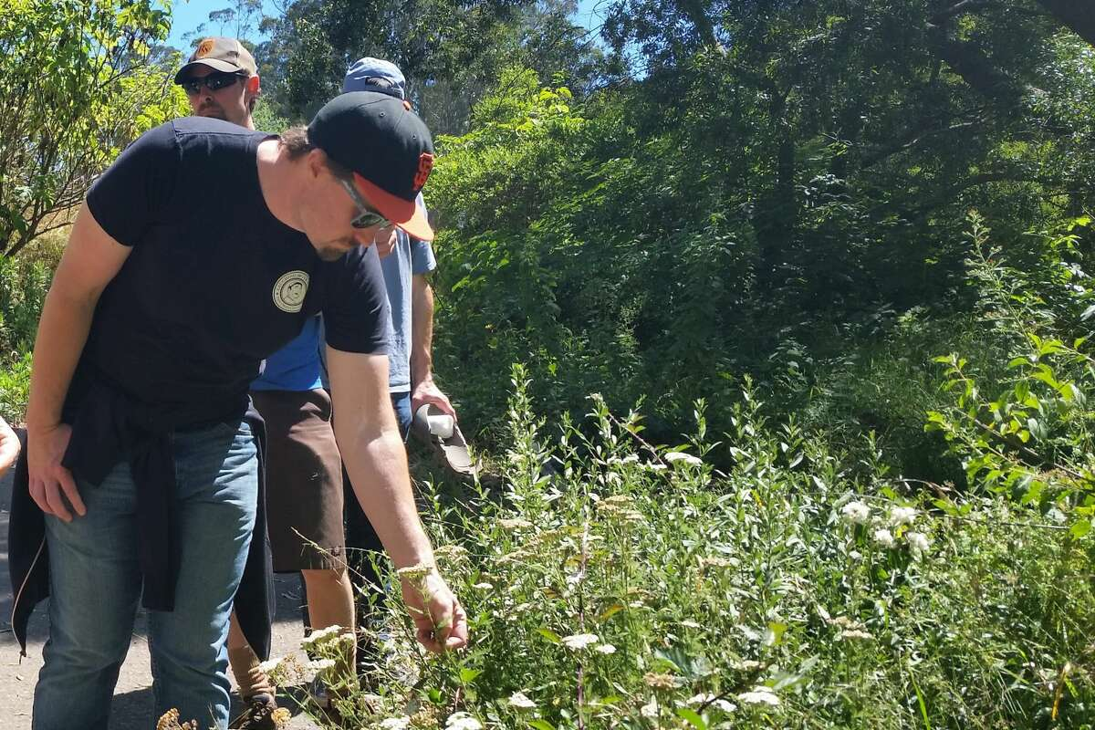 The Sutro Stewards guide Bay Area brewers through local woods in preparation for their Beers Made By Walking Project.