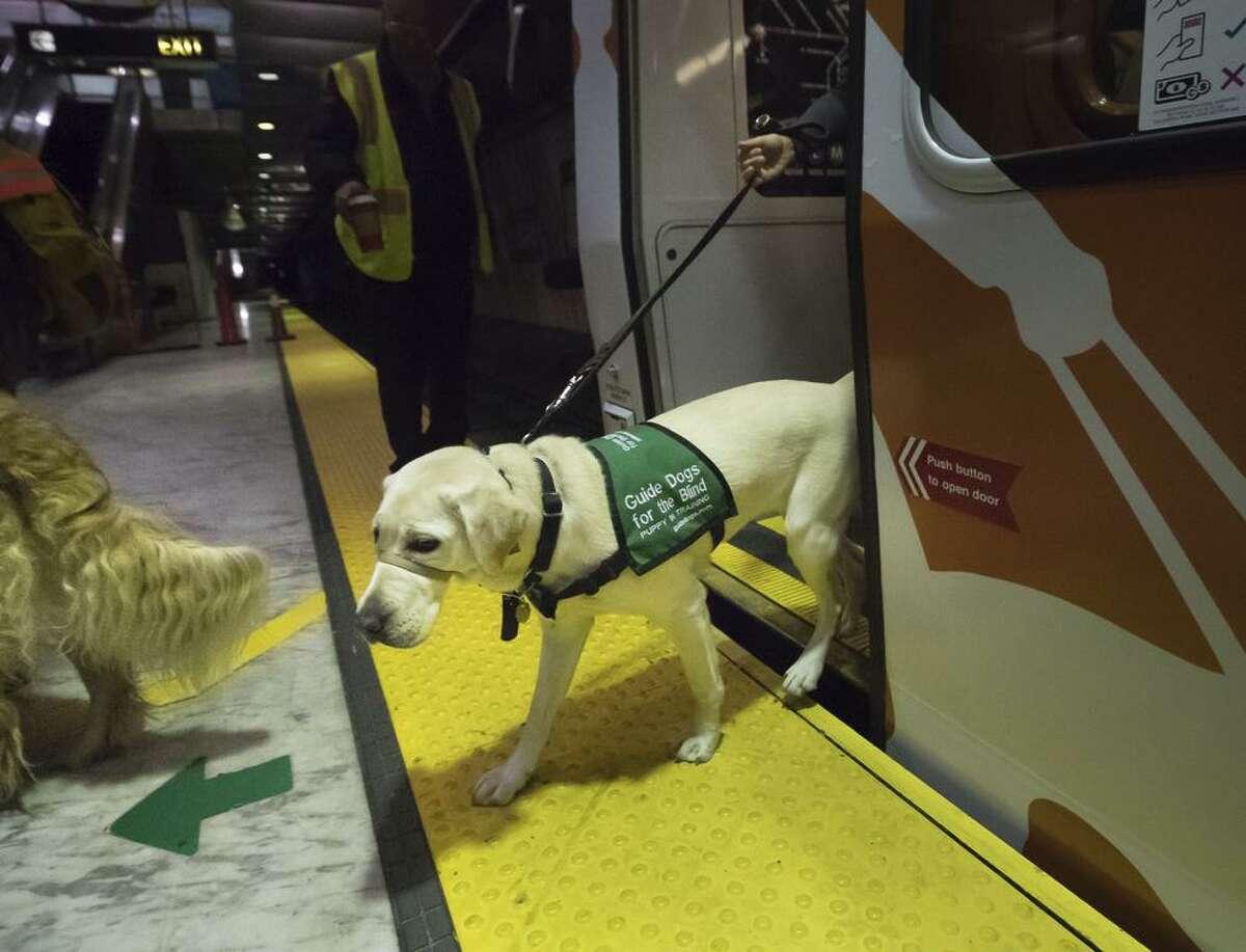 Wisp leaves a Muni Metro train with raiser Kathy Heidenreich.