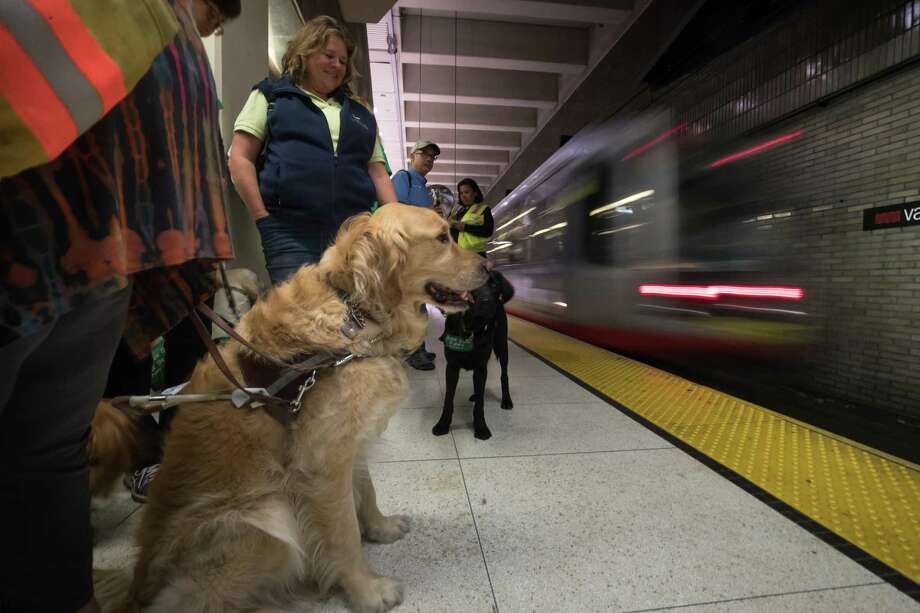 Your dog might need a Clipper Card  How pet friendly are Bay