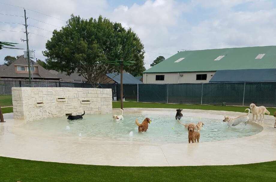 Rover Oaks Pet Resort has unveiled its latest addition to its Katy pet care facility – a water park for dogs. Photo: Rover Oaks