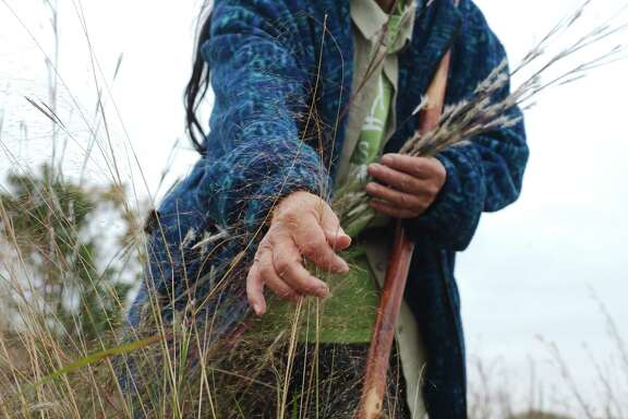 Shen demonstrates how to to collect Guly Muhly seeds from the prairie in Deer Park.