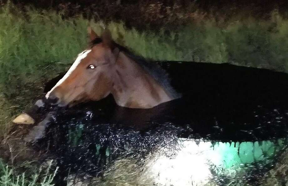 Atacosa County deputies have opened an investigation after a horse nearly died from falling into an oil vat.