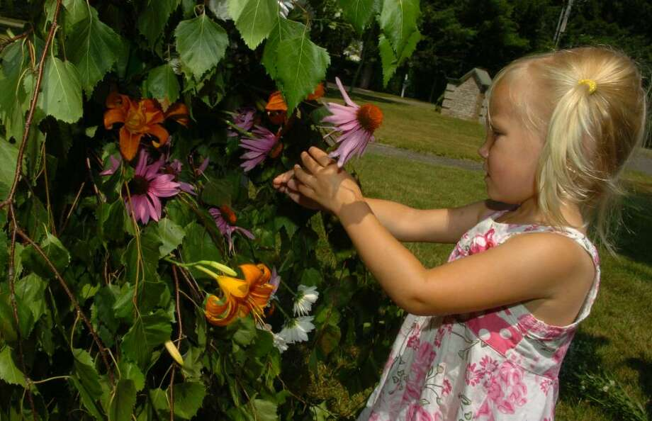 The Scandinavian Club held its Midsummer Celebration in Fairfield, Conn. on Saturday June 26, 2010. A maypole was raised and decorated. Afterwards, traditional folk songs were played with dances around the maypole as well. Here, Chrissie Osterholm, 2, of Oxford, decorates the maypole with some flowers. Photo: Christian Abraham / Connecticut Post