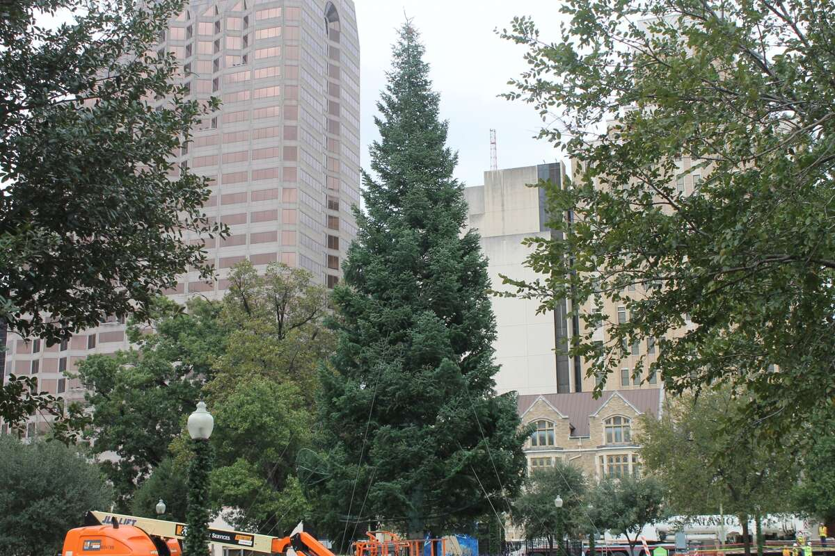 Travis Park A 55-foot White Fir will stand at Travis Park for the first time this year. The famous display moved from Alamo Plaza, and it will be illuminated on Nov. 24.
