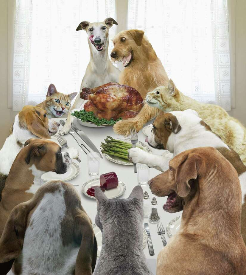 It's unrealistic to think that several dogs coming together in a strange place will behave perfectly. You must manage the gathering of dogs and aniticipate problems to prevent them. Photo: John Lund /Getty Images / Blend Images RM / This content is subject to copyright.