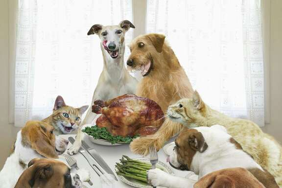 It's unrealistic to think that several dogs coming together in a strange place will behave perfectly. You must manage the gathering of dogs and aniticipate problems to prevent them.