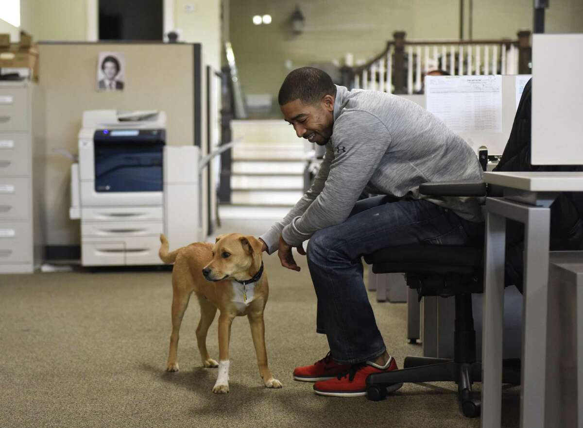 Regional Manager Josh Whiting pets the office dog, Jax, at Tri-State LED Lighting in the Byram section of Greenwich, Conn. Wednesday, Nov. 8, 2017. Tri-State LED, a division of Revolution Lighting Technologies, has recently surpassed $50M in total cumulative sales since its founding in 2010 and has now completed more than 2,000 LED projects across industries.