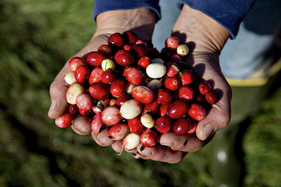 Cranberries during harvest in Camp Douglas, Wisconsin in October 2017. The cranberry's tartness, brilliant hue and nutritional benefits are part of the tapestry of Native American cuisine. Photo: Bloomberg Photo By Daniel Acker. / Bloomberg