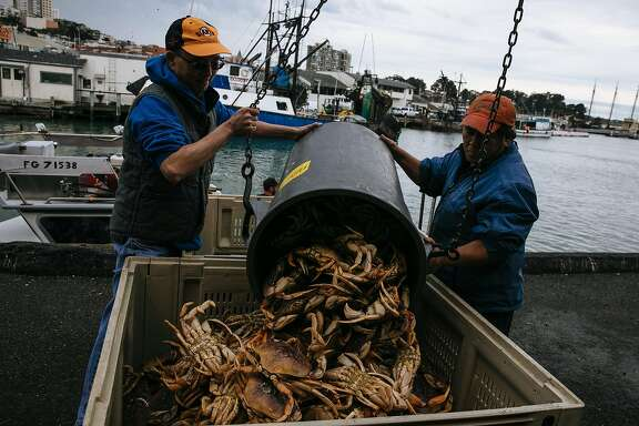 Peter Wong and Peter Nguyen unload Dungeness crab from The Off Shore at Pier 45 in San Francisco, Calif. Wednesday, November 15, 2017.