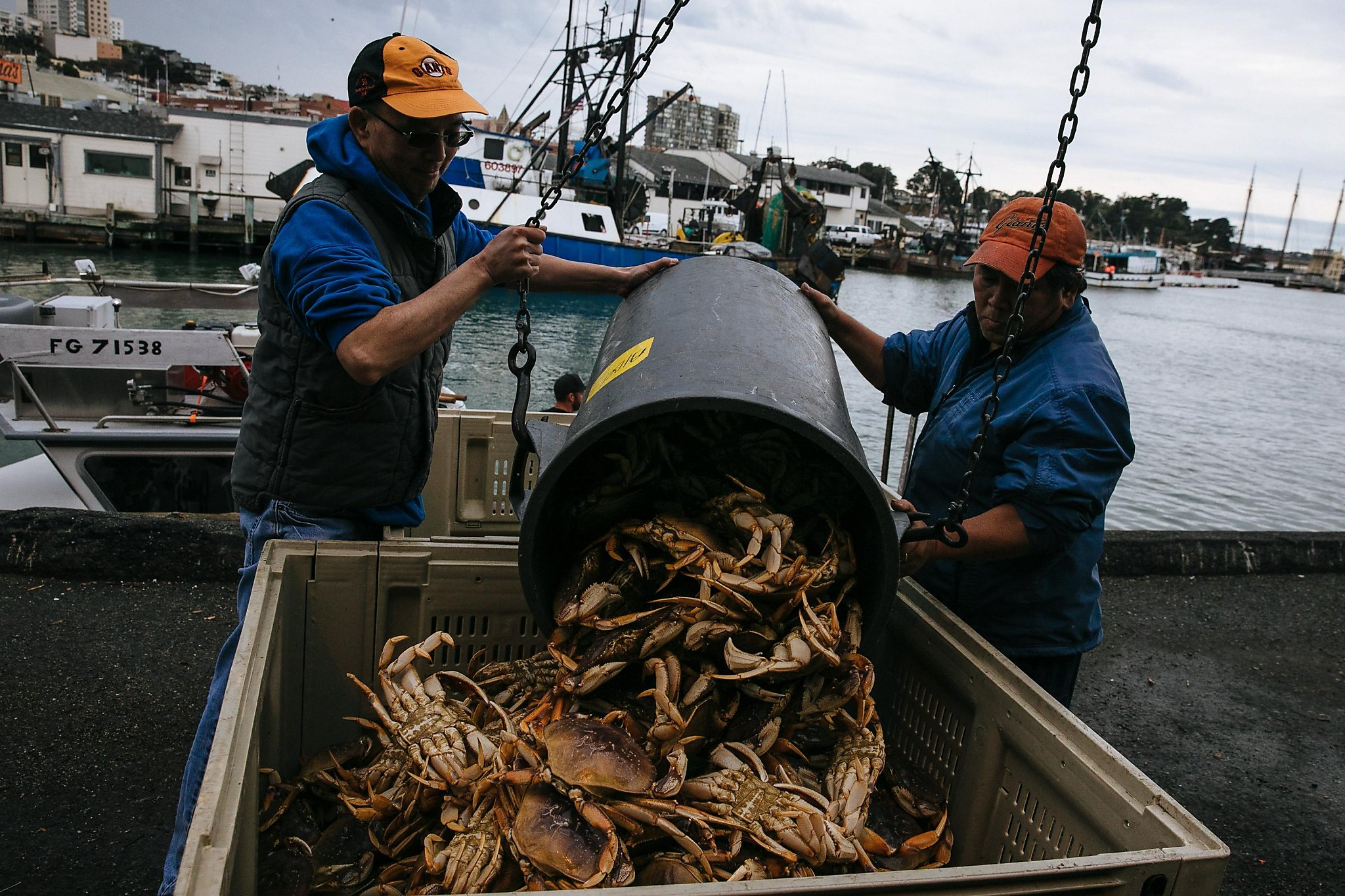 Dungeness Crab Season Begins In The Bay Area Sfchronicle Com