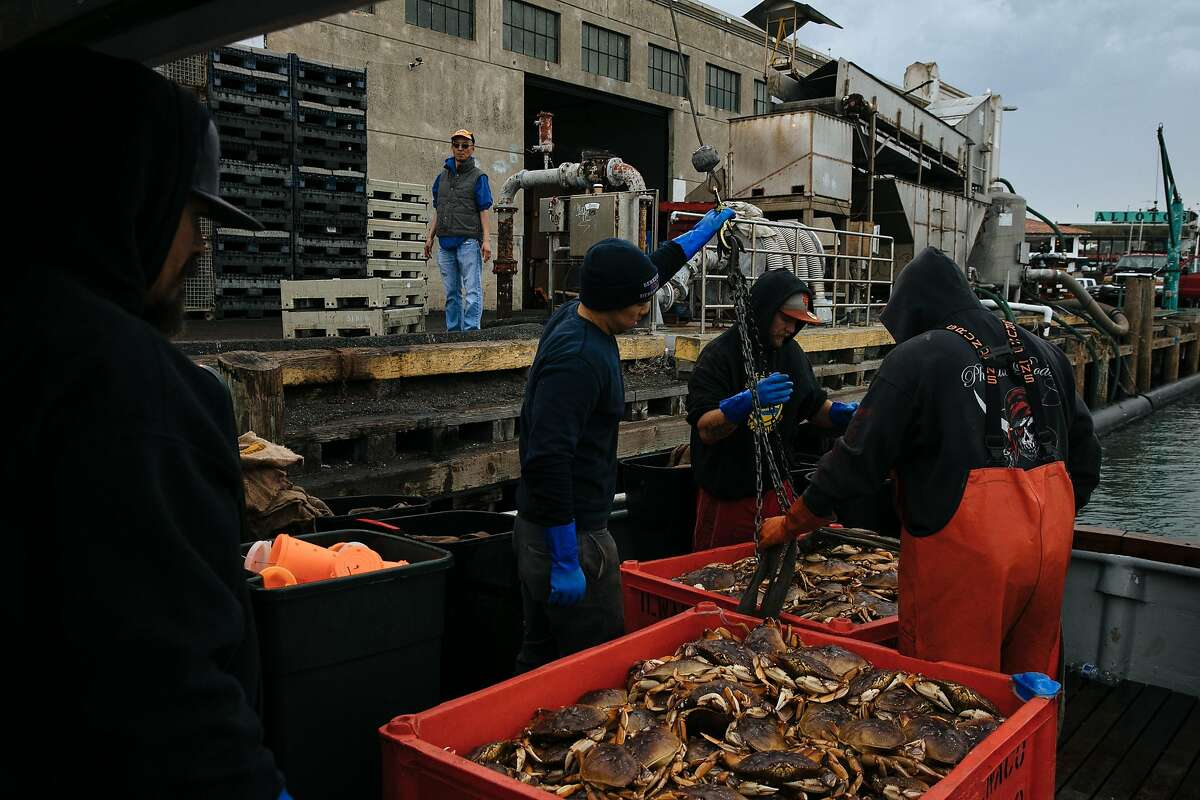 """The crew members of boat, the """"New Easy Rider,"""" unload their catch of Dungeness crab from their boat at Pier 45 in San Francisco, Calif. Wednesday, November 15, 2017."""