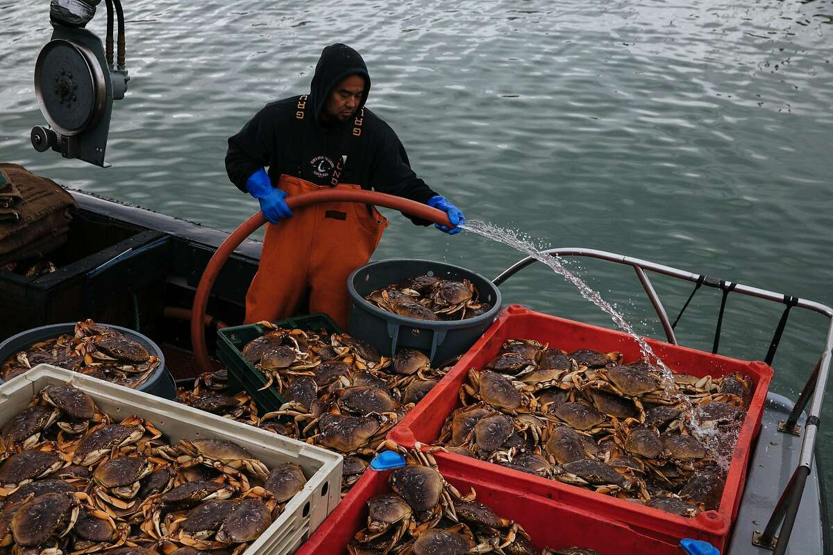 Ray Gregg sprays water on the Dungeness crabs as the crew waits to unload their catch at Pier 45 in San Francisco, Calif. Wednesday, November 15, 2017.