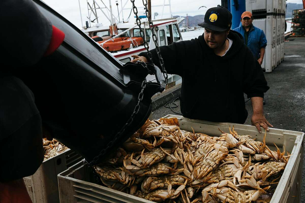 Ricky Hernandez helps unload the Dungeness crab at Pier 45 in San Francisco, Calif. Wednesday, November 15, 2017.