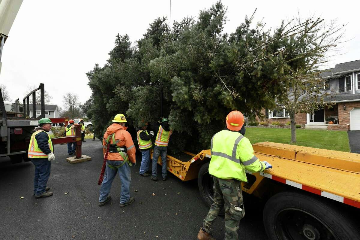 Workers from the state Office of General Services prep the tree they cut from Michael Scott's front yard in Colonie. The tree is destined for the Empire State Plaza where it will be installed for the upcoming holiday season.