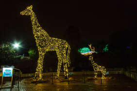 A scene from a previous Wild Lights at the Saint Louis Zoo.