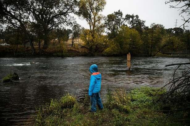 Amedeo Tira, 10, watches as salmon swim up the Mokelumne River to the Mokelumne River Hatchery in Clements, Calif. Thursday, November 16, 2017.